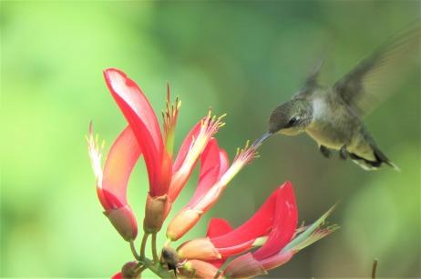 bird-2530184_1280