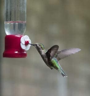 hummingbird-599443_1280